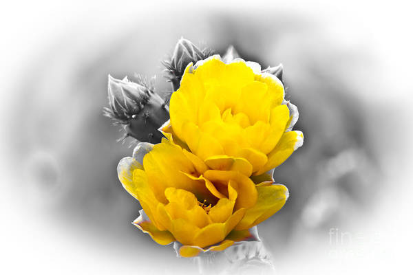 Photograph - Flower by Gunter Nezhoda