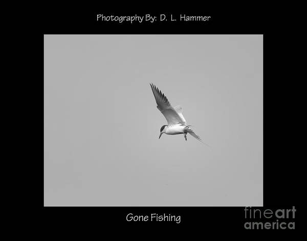 Wall Art - Photograph - Gone Fishing by Dennis Hammer