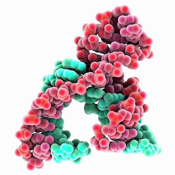 Hammerhead Photograph - Hammerhead Ribozyme Molecule by Laguna Design