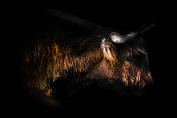 Longhorn Cattle Wall Art - Photograph - Highland Cow by Ian Hufton