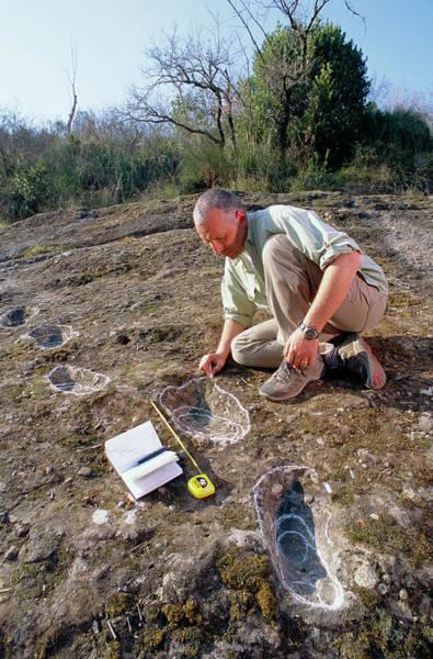 Wall Art - Photograph - Homo Erectus Tracks by Mauro Fermariello/science Photo Library