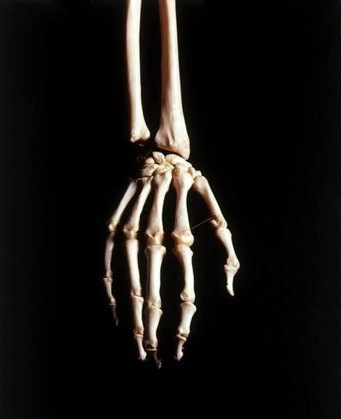 Hand Anatomy Wall Art - Photograph - Human Skeleton by Dorling Kindersley/uig