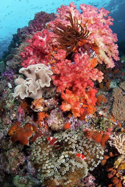 Anemonefish Photograph - Indonesia, Papua, Raja Ampat, Se Misool by Jaynes Gallery