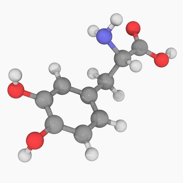 Wall Art - Photograph - Levodopa L-dopa Drug Molecule by Laguna Design/science Photo Library