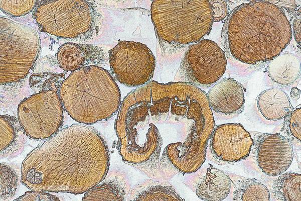 Photograph - Logging by Jim West