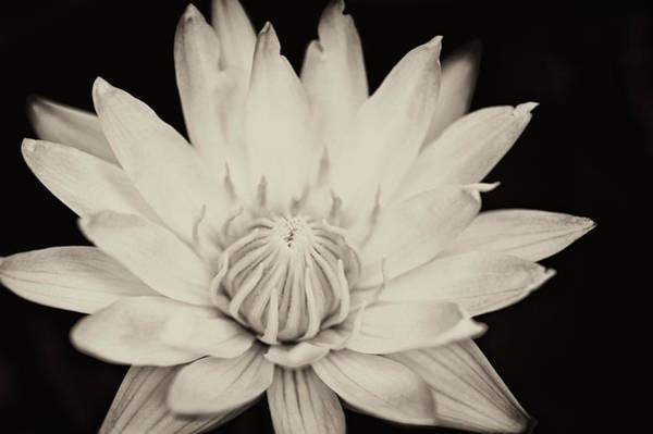 Photograph - Lotus Flower by U Schade