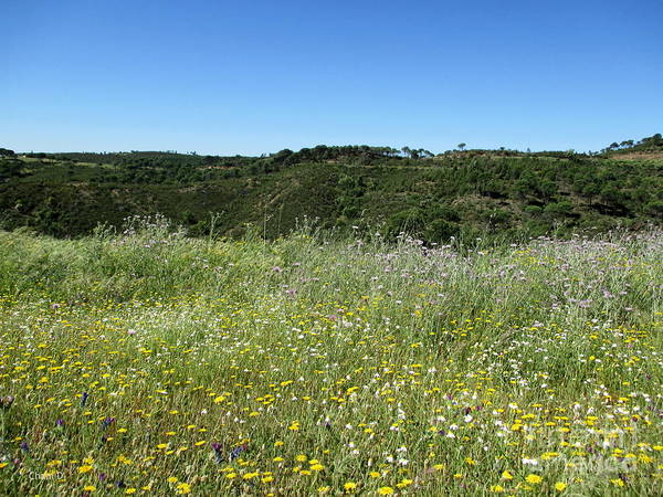 Pyrography - Meadow Near Nerva by Chani Demuijlder