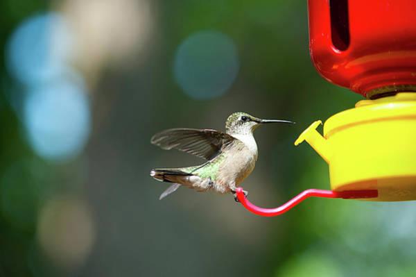 Hummingbird Feeder Photograph - Minnesota, Mendota Heights by Bernard Friel