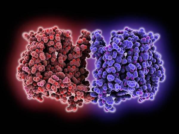 Escherichia Coli Photograph - Multidrug Transporter Molecule by Laguna Design