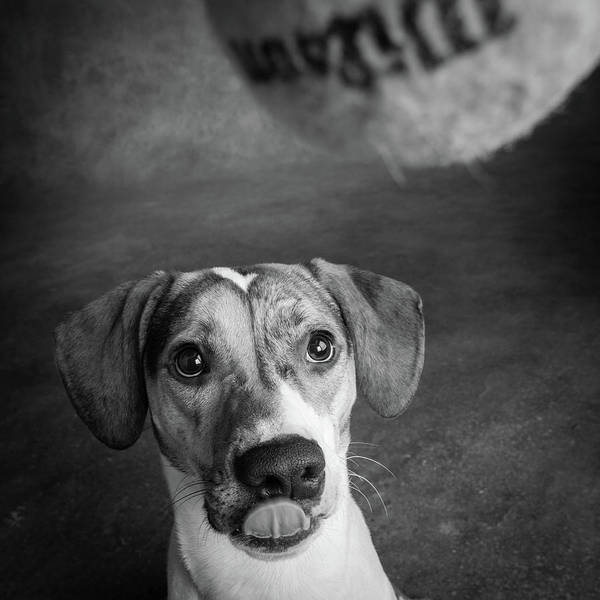Wall Art - Photograph - Portrait Of A Mixed Dog With A Tennis by Animal Images