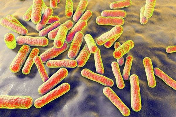Wall Art - Photograph - Propionibacterium Bacteria by Kateryna Kon/science Photo Library