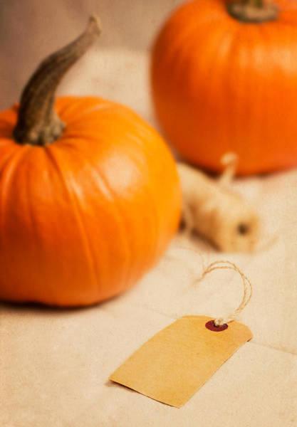 Gourd Photograph - Pumpkins by Amanda Elwell