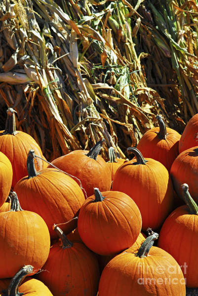 Photograph - Pumpkins by Elena Elisseeva
