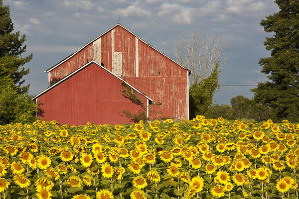 Photograph - Red Barn by Nick Mares