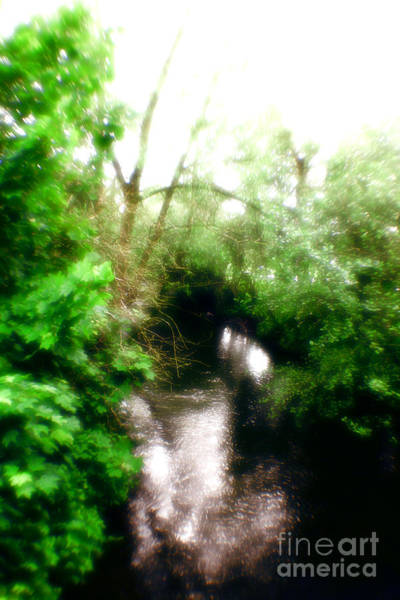 Photograph - Magical Forest by Doc Braham