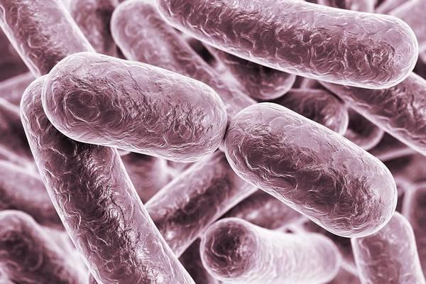 Escherichia Coli Photograph - Rod-shaped Bacteria by Kateryna Kon/science Photo Library