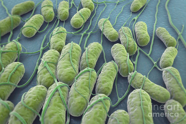 Wall Art - Photograph - Salmonella Bacteria by Science Picture Co