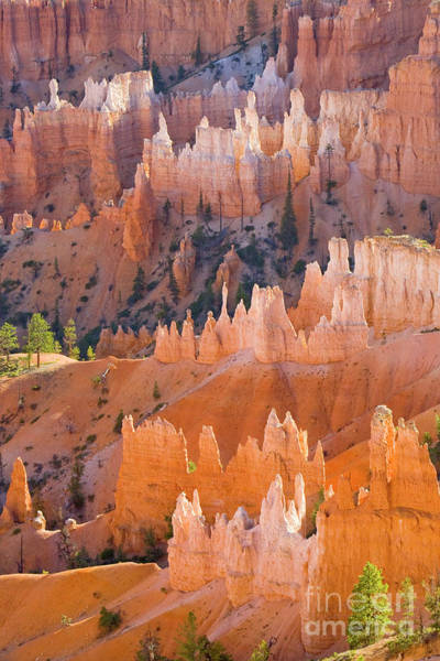 Photograph - Sandstone Hoodoos In Bryce Canyon  by Yva Momatiuk John Eastcott