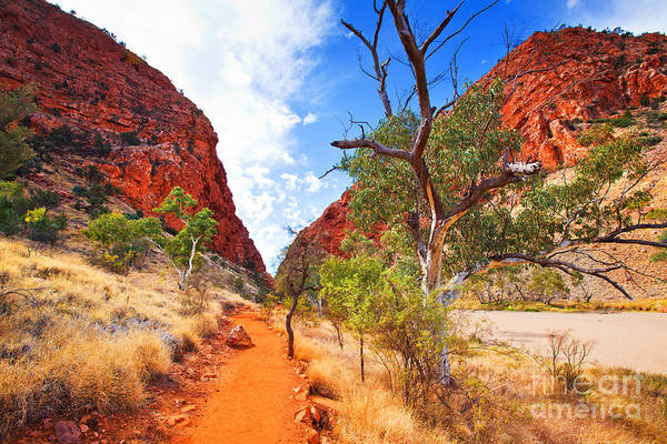 Central Australia Photograph - Simpsons Gap by Bill  Robinson