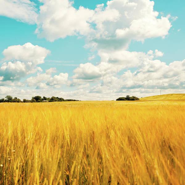 Skane Photograph - Summer Field by Lkpgfoto