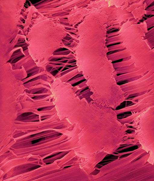 Wall Art - Photograph - Teflon Tape (plumber's Tape) by Dennis Kunkel Microscopy/science Photo Library