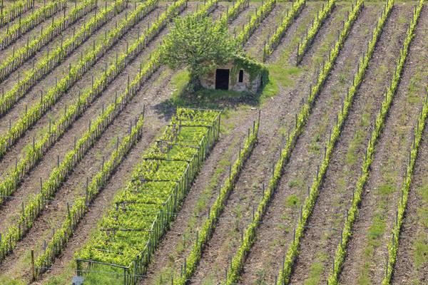 Siena Italy Photograph - Tuscany - Montalcino by Joana Kruse