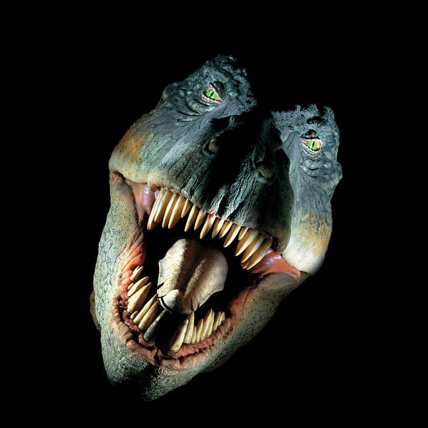 Rex Photograph - Tyrannosaurus Rex Model by Natural History Museum, London/science Photo Library