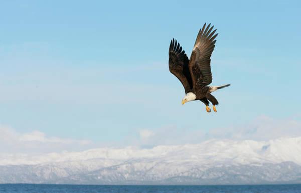 Bald Mountain Photograph - Usa, Alaska, Homer by Jaynes Gallery