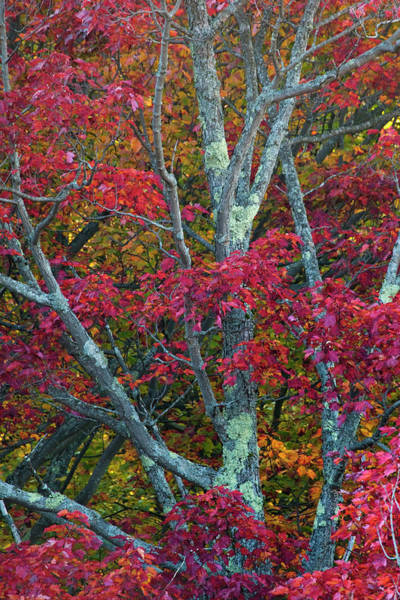 Franconia Notch State Park Photograph - Usa, New Hampshire, White Mountains by Jaynes Gallery