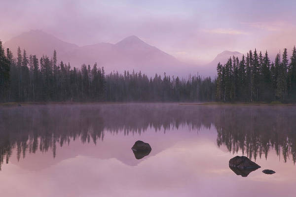 Free Range Photograph - Usa, Oregon, Willamette National Forest by Jaynes Gallery