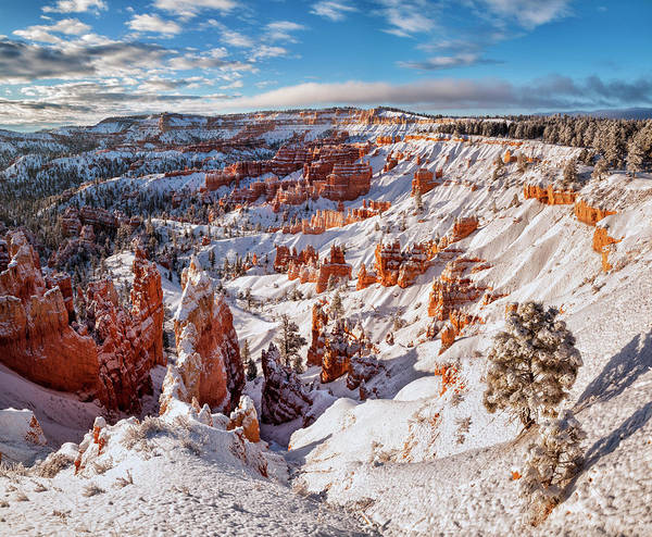 Amphitheater Wall Art - Photograph - Usa, Utah, Bryce Canyon National Park by Ann Collins
