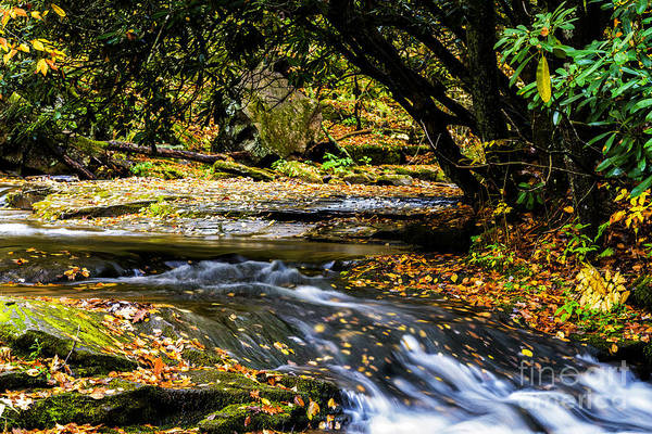 Trout Stream Photograph - Williams River Headwaters by Thomas R Fletcher