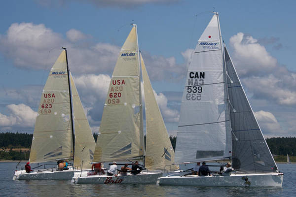 Photograph - Whidbey Island Race Week by Steven Lapkin