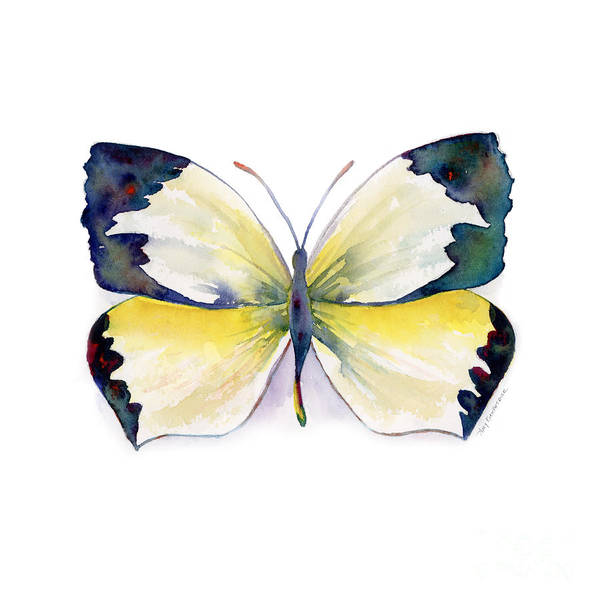 Painting - 55 Mexican Yellow Butterfly by Amy Kirkpatrick