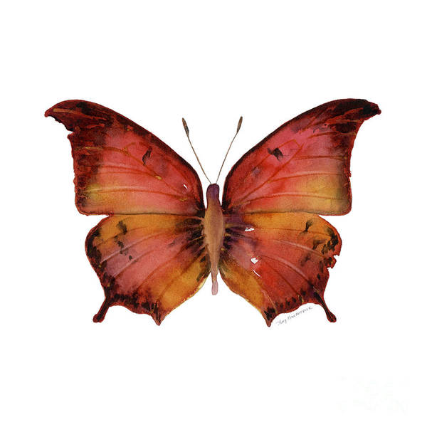 Wall Art - Painting - 58 Andria Butterfly by Amy Kirkpatrick