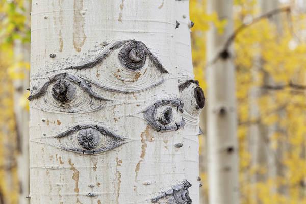 Wall Art - Photograph - Usa, Colorado, San Juan Mountains by Jaynes Gallery