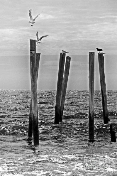 Wall Art - Photograph - 59th Street Pier With Seagulls by Tom Gari Gallery-Three-Photography