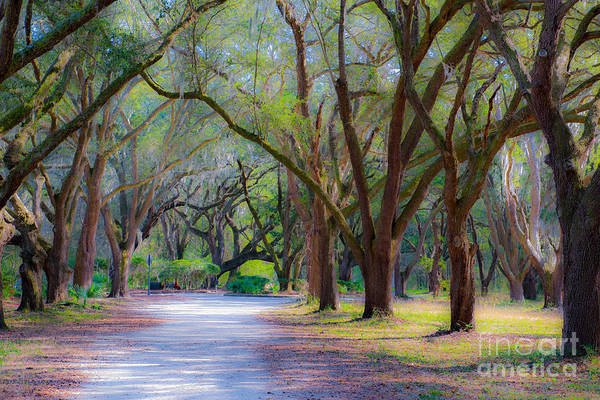 Photograph - Allee Of Oaks by Dale Powell