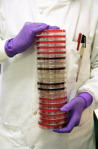 Technician Photograph - Bacteria Research by Sotiris Zafeiris/science Photo Library