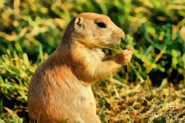 Cynomys Ludovicianus Painting - Black-tailed Prairie Dog by George Atsametakis