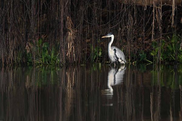 Wall Art - Photograph - Brazil, The Pantanal by Ellen Goff
