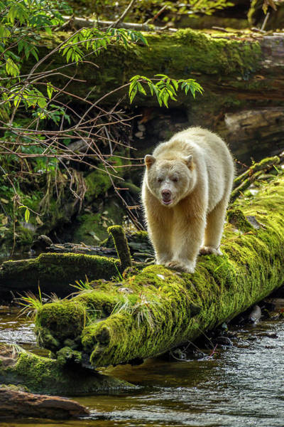 Bear Creek Photograph - Canada, British Columbia, Inside Passage by Jaynes Gallery