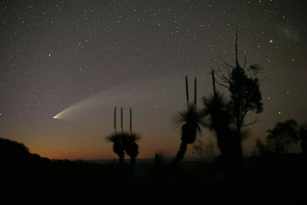 Astronomical Twilight Photograph - Comet Mcnaught by Robert Mcnaught/science Photo Library