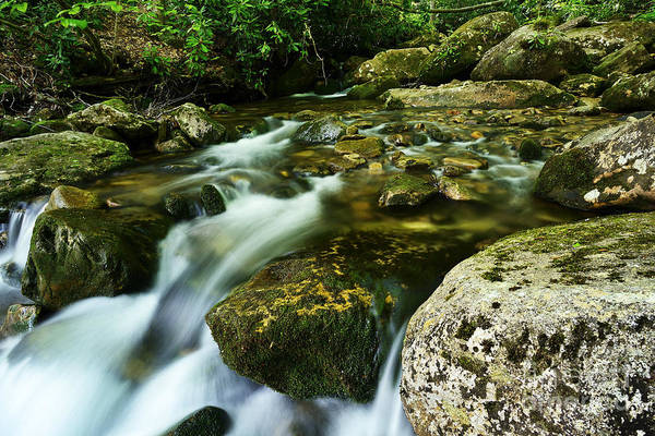 Trout Stream Photograph - Cranberry Wilderness by Thomas R Fletcher
