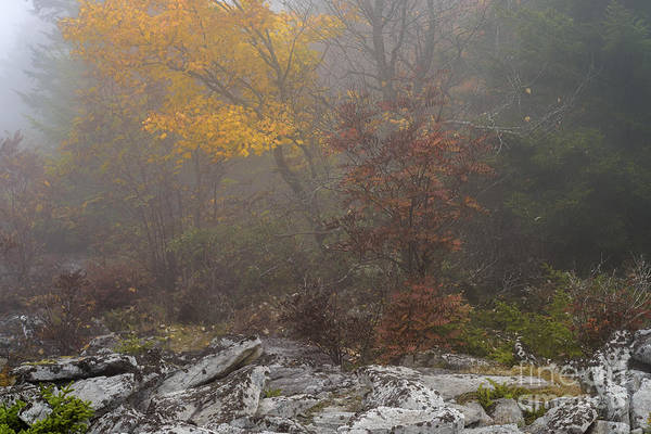 Photograph - Dolly Sods Wilderness by Thomas R Fletcher