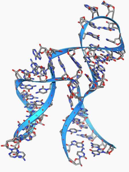 Hammerhead Photograph - Hammerhead Ribozyme Molecule by Laguna Design/science Photo Library
