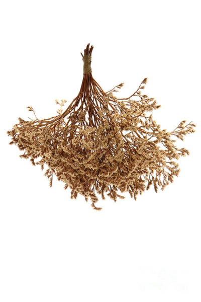 Photograph - Hanging Dried Flowers Bunch by Olivier Le Queinec