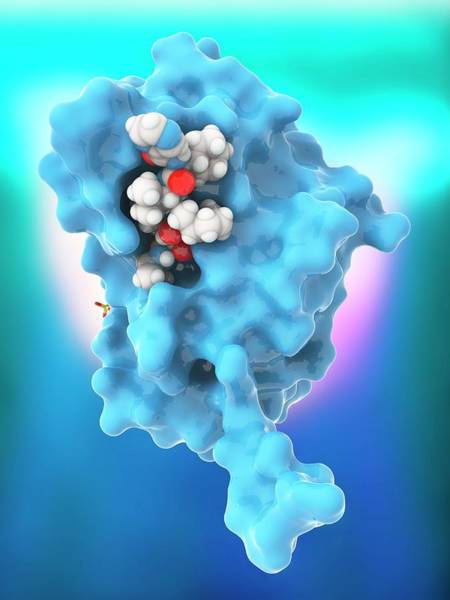 Quaternary Photograph - Hepatitis C Proteins And Drug Complex by Ramon Andrade 3dciencia