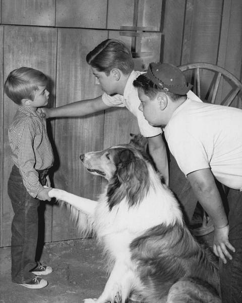 Collie Photograph - Lassie by Retro Images Archive