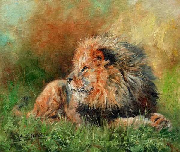 Lioness Wall Art - Painting - Lion by David Stribbling